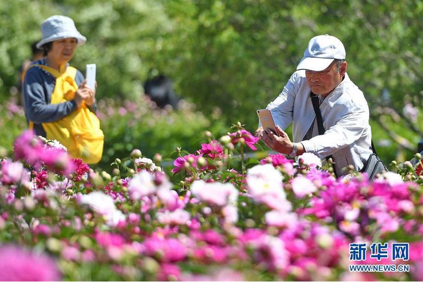 6月5日,在长春公园芍药园内,游人在拍照留念。随着气温升高,吉林省长春公园内6万余株芍药花进入盛放期,吸引众多游人前来观赏。 新华社记者 张楠 摄